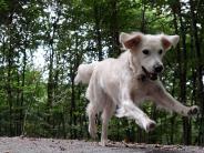 Tiere: Pinkeln zur Begrüßung bei Hunden ignorieren