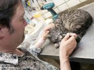 Tiere: Bello für immer: Tote Haustiere präparieren lassen