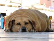Ernährung: Übergewicht bei Haustieren: Ach du dicker Hund!