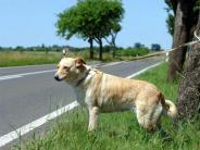 Tiere: Ausgesetztes Tier nicht anfassen und Polizei rufen
