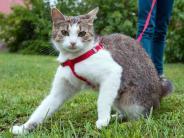 Tiere: Mit Leine und viel Vorsicht: Gassi gehen mit der Katze