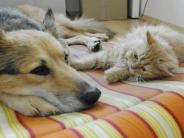 Haustiere: Schnurren und Knurren: So halten Sie Katzen und Hunde zusammen