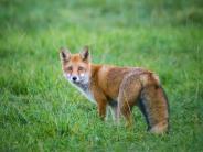 Wunsiedel: Fuchs wütet in Greifvogelpark und tötet sieben Tiere der Flugshow