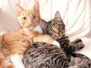 Bayern: Babyboom bei Katzen - Tierschützer fordern Kastration für Streuner