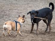 Tipps für Halter: Nicht alle Hunde sind Freunde: Konflikte vermeiden
