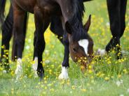 Gesundheit: Pferd als Haustier: Reiten soll gesund sein