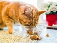 Stiftung Warentest: Bei Katzenfutter zählt der Nährstoffmix