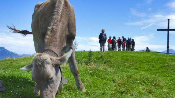 Wanderin in den Tiroler Alpen von Kuh getötet
