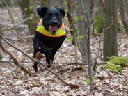 Früh übt sich: So wird ein Welpe zum Rettungshund