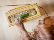 «Hallo Hasso»: Radio für Hunde - oder: WelcheMusik hören Schlappohren?