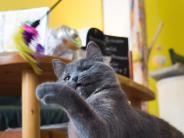 Ein etwas anderes Lokal: Kuchen essen und Katzen kraulen: Zu Besuch im Katzencafé