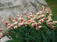 : Zwiebelblumen: Eine Freude auf dem Friedhof