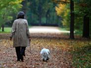 Deiningen: Hundehasser treibt sein Unwesen - dritter Hund vergiftet