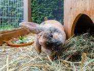 Schnupfen bis Myxomatose: Die häufigsten Krankheiten bei Kaninchen im Überblick