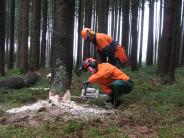 Forst- und Waldarbeiten: Im Wald selbst mit anpacken