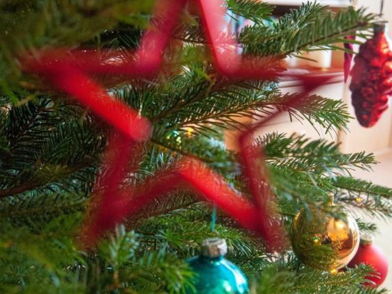 weihnachten woher kommt eigentlich der weihnachtsbaum geld leben augsburger allgemeine. Black Bedroom Furniture Sets. Home Design Ideas