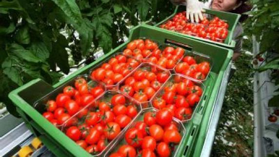 aromatisches gem se die richtige tomate macht den. Black Bedroom Furniture Sets. Home Design Ideas