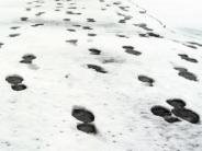 Augsburg: Schneespuren verraten Ladendieb: Zwei Männer in U-Haft