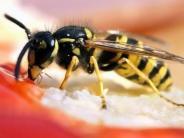 Wespenstiche und Co.: Gesundheit: Wenn das Kind von der Wespe gestochen wird