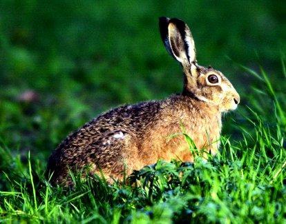 Tiere die vom aussterben bedroht sind