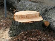 Bad Wörishofen: Debatte um den Schutz der Bäume