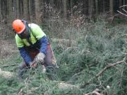 : Schwerstarbeit im Wald