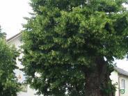 Heimaträtsel: So schöne, ach, grünt ihre Krone