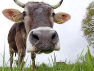 Landfrauentag im Unterallgäu: Kuhstress vermeiden