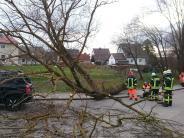 : Bäume stürzen um