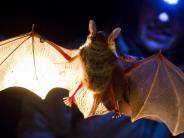 Bayerntour Natur: Fliegende Tänzer und Akrobaten der Nacht