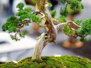Hobbytreff in Mittelschwaben: Ein Baum zum Mitnehmen