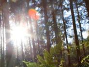 Vortrag in Mindelheim: Nachhaltig bauen mit Holz