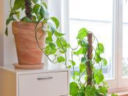 Ratgeber: So überleben Ihre Zimmerpflanzen