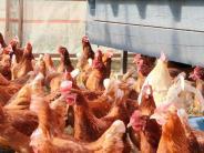 Vogelgrippe im Unterallgäu: Noch kein Ende in Sicht