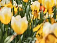Veranstaltung: Heute den Frühling mit allen Sinnen genießen