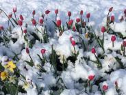 Frühling im Unterallgäu: Wenn das Wetter Achterbahn fährt