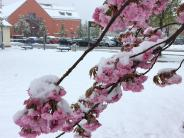 Wetter: Schneebruch behindert den Verkehr