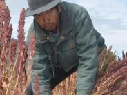 : Die dunkle Seite des Quinoa-Trends
