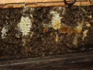 """: Der """"Killer Sound"""" schützt die Bienen"""