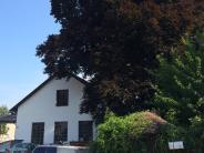 Bau: Der Baum als Störenfried