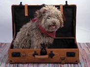 Ferien: Endlich Urlaub! Aber wohin mit dem Tier?