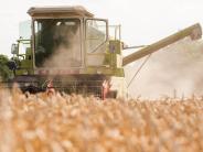 Landkreis Augsburg: Wetterextreme machen Landwirten zu schaffen
