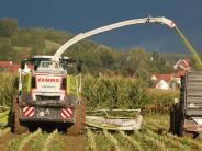 Kriminalität: Angst vor Attacken in Maisfeldern