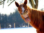 Wissenschaft: Können Tiere eigentlich lachen?