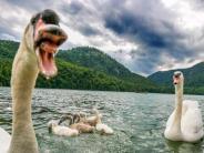 Landkreis: Mein lieber Schwan – da kann Nessie einpacken