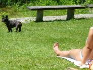 Neu-Ulm: Hundehaufen trüben den Badespaß am Pfuhler See