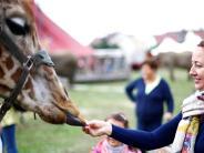 Weißenhorn: Manege frei für die Tierrechtler