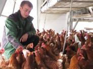 Landkreis Neu-Ulm: Vogelgrippe bremst Geflügelzüchter aus