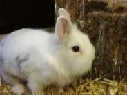 : Kaninchen wollen bald nach draußen