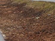 Nersingen/Landkreis: Warum die Bäume fallen mussten
